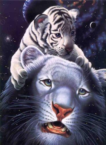 General page 2 - Bebe tigre mignon ...
